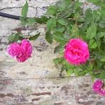 Garten privat